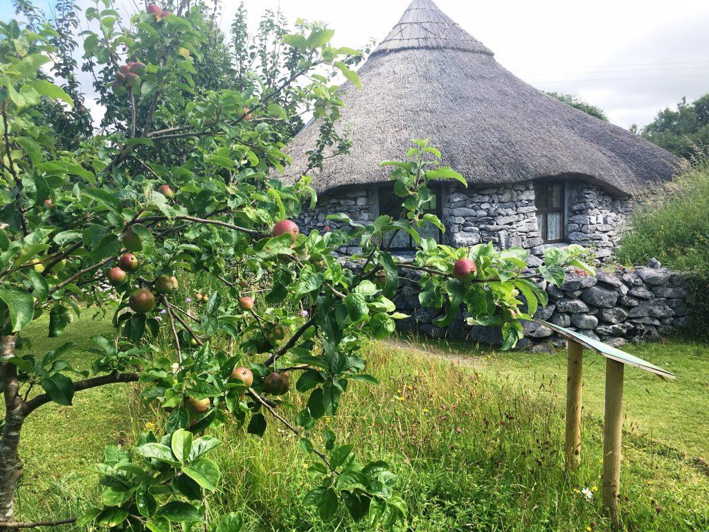 Gallert_Celtic_Garden_Roundhouse_Apple_trees_brigits_garden_galway