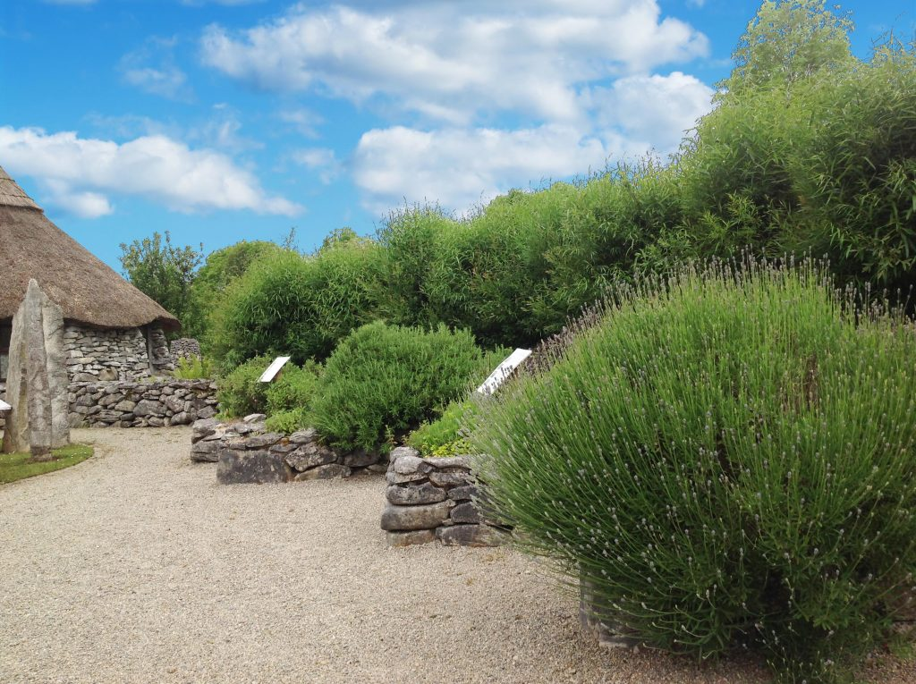 Gallery_Celtic_Garden_Lughnasa_Herb_Garden_Brigits_Garden_Galway