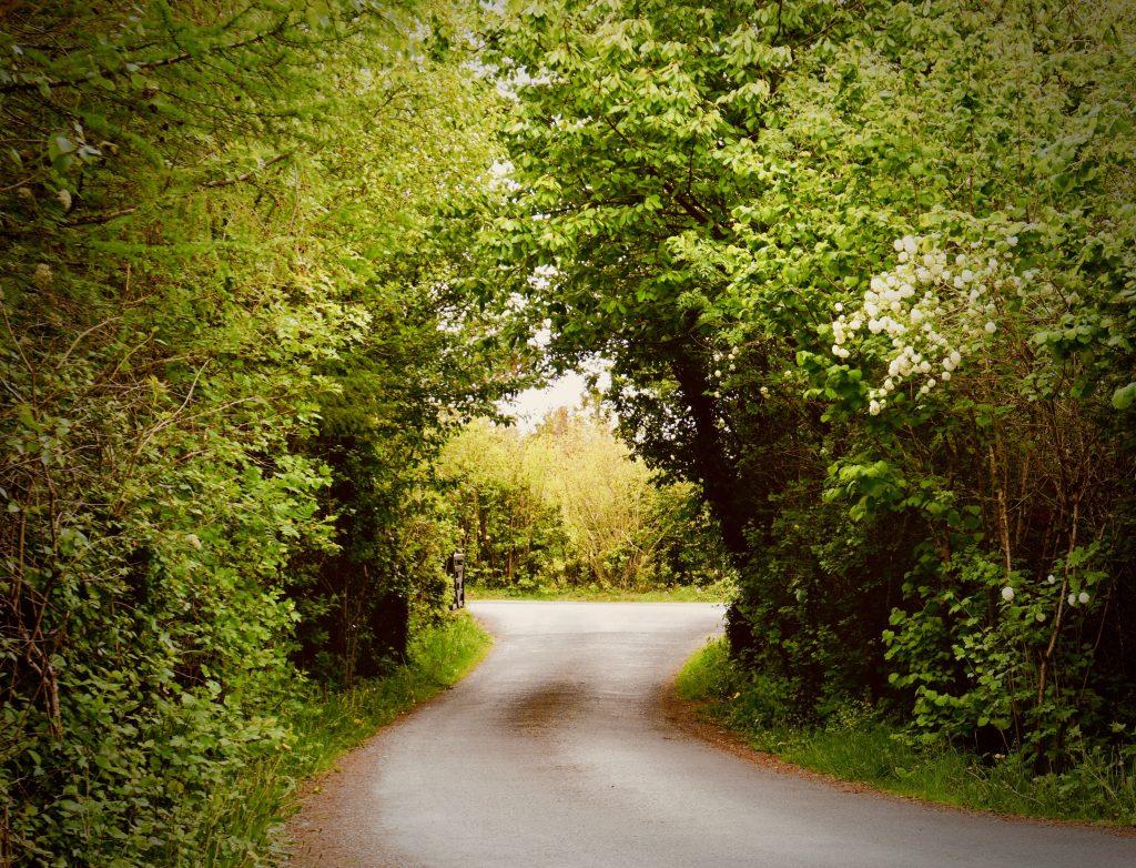 Gallery_Sun_trail_Entrance_to_Brigits_Garden_Galway