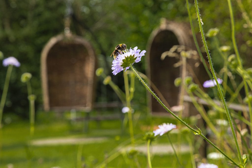 Gallery_Celtic_Garden_Imbolc_Garden_Brigits_Garden_Galway
