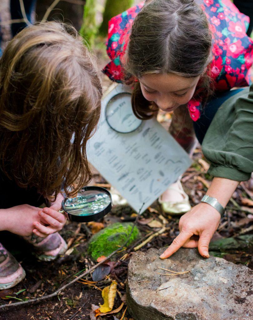 Gallery_For_kids_Wildlife_examination_brigits_garden_galway