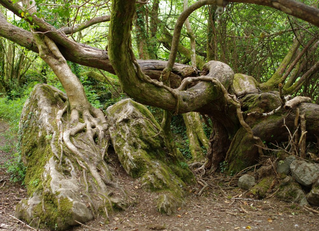 Gallery_Sun_trail_Old_woodland_Brigits_garden_galway