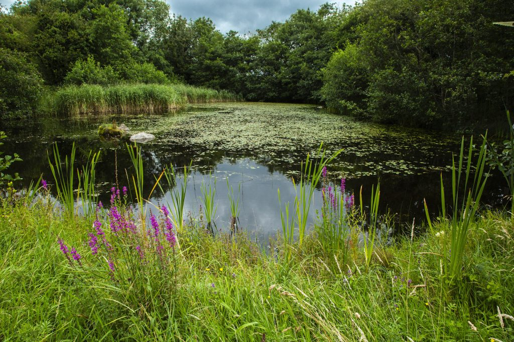 Gallery_Sun_Trail_Lochán_Brigits_Garden_Galway